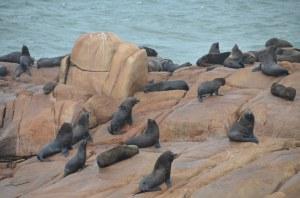 Seelöwen am Cabo Polonio