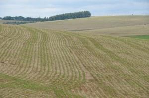 Riesige Felder in Rio Grande do Sul