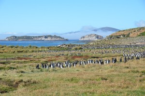 Pinguine, wohin man auch schaut