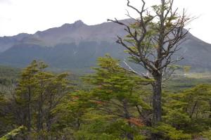Blick über Tal des Rio Pipo
