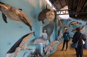Museum auf der Estancia Haberton