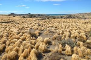 Landschaft im Parque Nacional Monte Leon