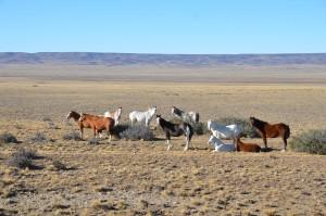 Pferde am Rande der Ruta Cuarenta