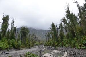 Durch Ausbruch des Vulkans Chaitén 2008 zerstörter Wald