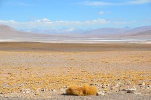 Altiplano auf chilenischer Seite