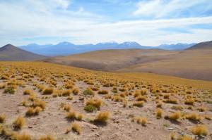 Landschaft im chilenischen Altiplano