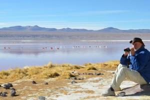 Flamingo-Beobachtungen an der Laguna Colorada