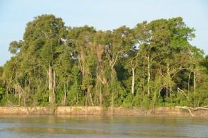 Urwald am Ufer des Rio Mamoré, des längsten Flusses in Bolivien