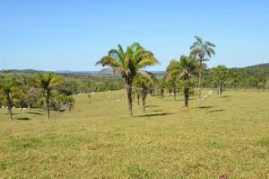 Hügelige Weidelandschaft in der Chiquitania