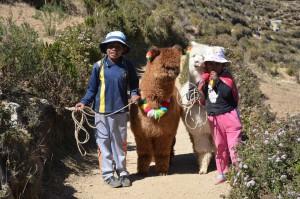 Kinder mit Alpakas auf der Isla del Sol