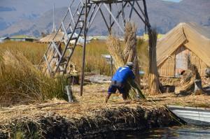 Schilfbündel werden zur Verstärkung des Inseluntergrundes und zum Haus- und Bootsbau benutzt