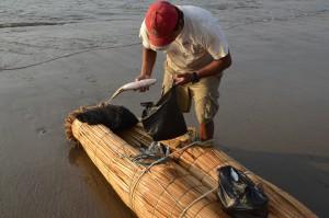 Die gefangenen Fische werden unterwegs in einer Vertiefung im hinteren Teil des Caballitos verstaut.