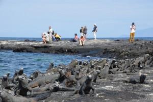 Meerechsen und Touristen