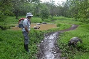 Im Schildkröten-Reservat El Chato im Hochland von Santa Cruz