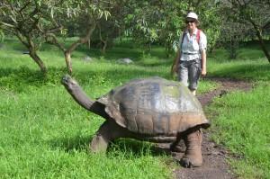 Galápagos-Schildkröten können erstaunlich groß und alt werden