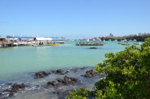 Hafen von Puerto Ayora
