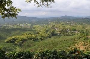 Kaffee-Hacienda Guayabal