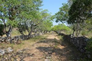 Auf dem Camino Real von Barichara nach Guane (2)
