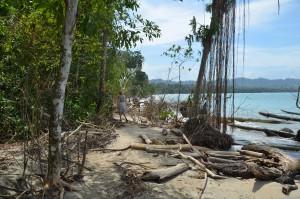 Der Urwald im Cahuita Nationalpark reicht bis unmittelbar ans Meer