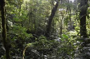 Im Nebelwald von Monteverde
