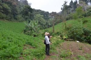 Hier werden Möhren, Bananen und Kaffee angebaut.