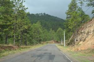 Kiefernwälder dominieren in Honduras.