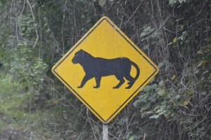 Ungewöhnliches Verkehrsschild: Achtung Jaguare