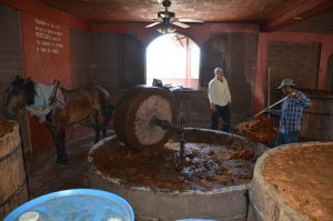 Mit Hilfe eines Mühlsteins und einer Pferdestärke wird der Saft herausgepresst.
