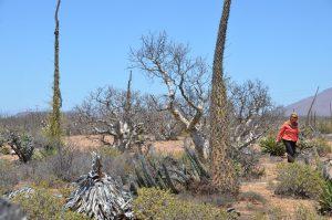 Eindrucksvolle Vegetation am Rande der Mex 1