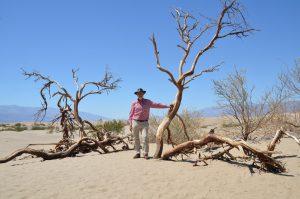 Sanddünengebiet mit abgestorbener Vegetation