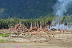 """Forstwirtschaft auf Kanadisch: Alles abräumen, wirtschaftlich interessante Bäume abtransportieren, """"Rest"""" verbrennen"""