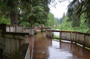 Beobachtungsplattform am Morgen des 13. Juli 2016: Keine Touristen, keine Lachse, keine Bären