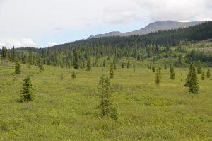 Landschaft im nördlichen Bereich des Cassiar Highways
