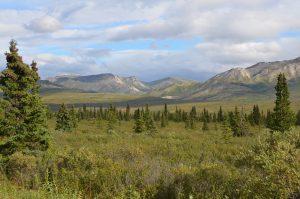 Landschaft im Denali National Park unweit vom Parkeingang