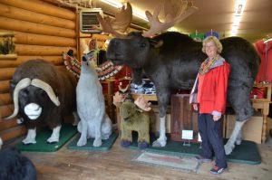 Plüschtiere in einem Gift Shop in Anchorage. Der Elch ist schon für 7.999 $ zu haben.