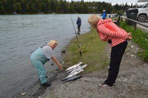 Stolze Anglerin präsentiert ihren Tagesfang von 6 Lachsen in Soldotna am Kenai River.