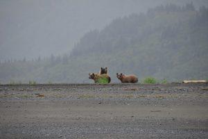 Andere Bären-Mutter mit zwei Jungen am Strand