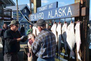 Im Hafen von Seward. Der Fang des Tages wird präsentiert.