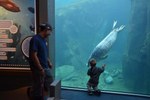 Ein kleiner Junge im Alaska Sea Life Center ist fasziniert von einem Harbor Seal.