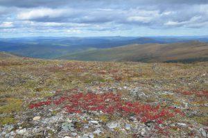 Blick vom Top of the World Highway durch die Wildnis Richtung Nordpol (1)