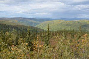 Blick vom Top of the World Highway durch die Wildnis Richtung Nordpol (2)