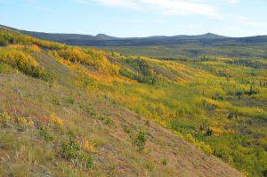 Herbstliche Farben am North Klondike Highway im Bereich des Fox Lakes