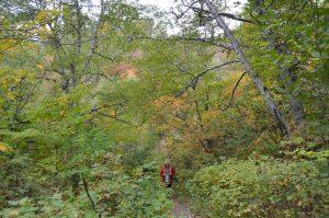 Im Herbstwald in der Nähe unseres Stellplatzes in Tadoussac