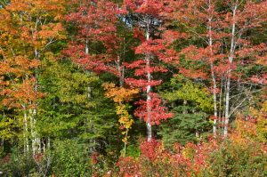 Indian Summer im Cape Breton Highlands National Park (1)
