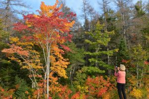 Indian Summer im Cape Breton Highlands National Park (2)