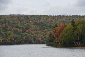 Herbstwald am Warren Lake, leider bei bewölktem Himmel (1)