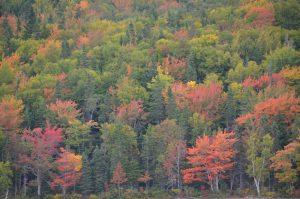 Herbstwald am Warren Lake, leider bei bewölktem Himmel (2)